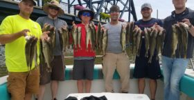 More great Summer Walleye while casting off of Vermilion, Ohio.